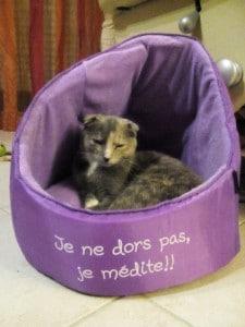 chat médit